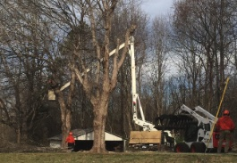 Alexandria Tree Services Unlimited | Tree Care Alexandria